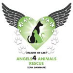 Angels4animals